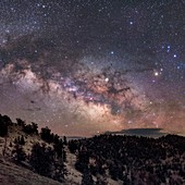 Milky Way over pine trees, California, USA