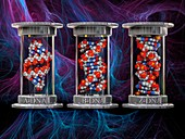DNA typology, illustration