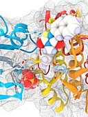 GSK3B enzyme complex with ADP and inhibitor, illustration