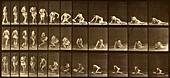 Woman lying down, Muybridge motion study, 1880s