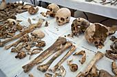 CMP missing people forensics laboratory, Cyprus