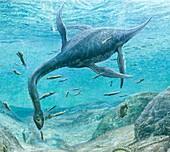 Plesiosaur feeding, artwork