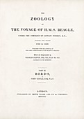 'Birds' (1841), 'The Zoology of the Voyage of HMS Beagle'