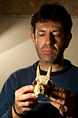 Archaeologist with Balearic Islands cave goat skull