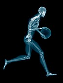 Basketball player's skeletal structure, illustration