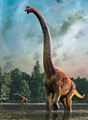 Giraffatitan, illustration