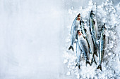 Fresh mackerel and sardines
