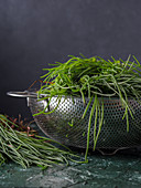 Raw spring agretti (barba di frate, Salsola soda) over black background in a metal colander