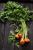 Frisches abgeschnittenes Karottengrün auf Holzuntergrund