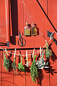 Herbs for making natural cosmetics hanging up to dry in front of a red wooden door