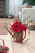 Weihnachts-Strauß mit Weihnachtsstern und Zweigen in Gießkanne