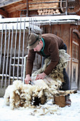 A man shearing a sheep