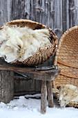 Freshly shorn sheep wool