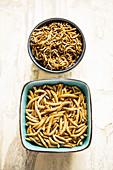 Essbare Mehlwürmer und Buffalowürmer in Schalen (gefriergetrocknet)