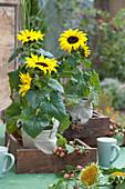 Sonnenblumen in Stoff-Taschen