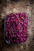 Red Amaranth Cress