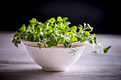 Cress in a bowl