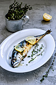Baked Mackerel Fish with Herbs and Lemon on beton surface