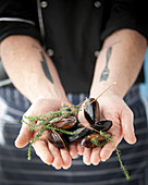 Hands holding mussels