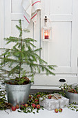 Small Christmas tree planted in bucket and decorated with mistletoe, apples, lantern and presents