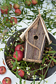 Red apples, mistletoe and nesting box in old pot