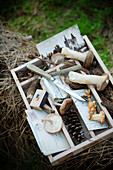Various mushrooms in a box on the forest floor