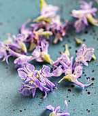 Edible rosemary flowers, close up