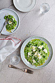 Pea risotto with buffalo mozzarella and spring herbs