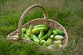 Gherkins in a wicker basket