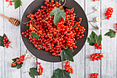 Redcurrants with leaves on a dish