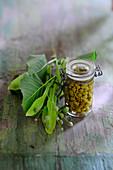 Pickled linden capers in a flip-top jar