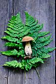 A penny bun mushroom on a fern leaf