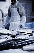 Salmon being processed in a fish factory