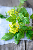 Fresh mustard plants with flowers