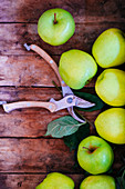Fresh green apples on a wooden surface next to a pair of garden shears