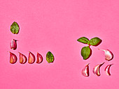 Basil and garlic cloves on a pink surface