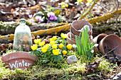 Winterlinge und Schneeglöckchen sind die ersten Frühlingsboten