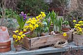 Holz-Kiste mit Winterlingen, Hyazinthen, Krokus und Blausternchen