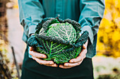 A person holding a fresh savoy cabbage