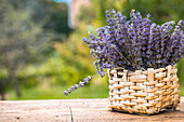 Flowering lavender in a basket outside on a wooden table