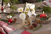 Kleiner Strauß aus Christrosen - Blüten