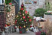 Weihnachtsbaum im Korb mit Birkenstämmen
