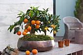 Calamondine und Kumquat in kupferfarbener Schale