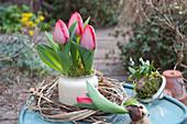 Tulpe 'Red Paradise' in Kranz aus Zweigen und Gräsern