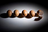Whole eggs and eggshells
