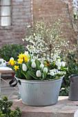 Frühlings-Schale mit März-Kirsche, Tulpen und Narzissen