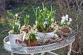 Schneeglöckchen und Blausternchen als Tisch-Arrangement