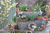 Frühlings-Arrangement mit Zwiebelblumen