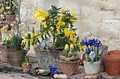 Blühende Akazie mit Tulpen und Iris