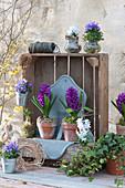Frühlings-Dekoration mit Hyazinthen in Holz-Kiste